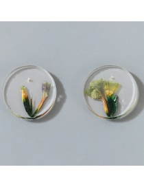 Fashion Green Round Transparent Dried Flower Earrings